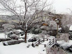 Domo Garden